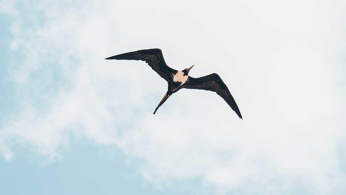 bird flying across a pale blue sky